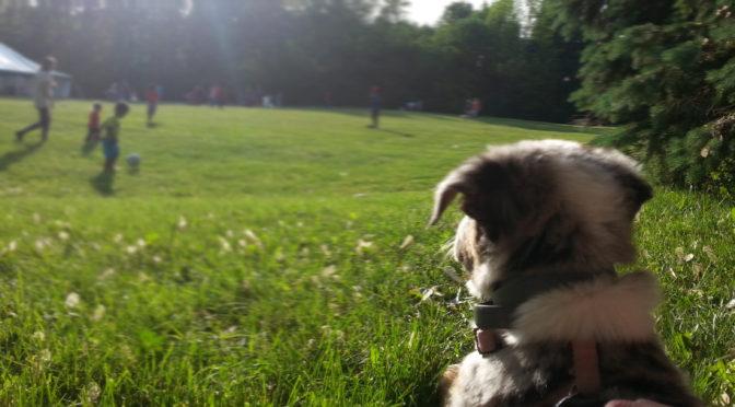 Smart Socialization Puppy Seminar